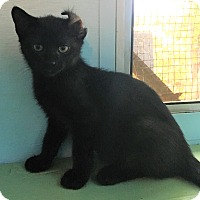 Adopt A Pet :: Bender - Savannah, GA