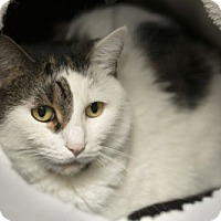 Adopt A Pet :: Emily - Lombard, IL