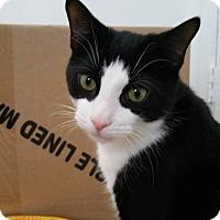 Adopt A Pet :: OREO (Located in Cocoa, FL) - New Smyrna Beach, FL