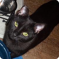 Adopt A Pet :: Clementine - Morganton, NC