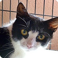 Adopt A Pet :: Sallie - Santa Fe, NM
