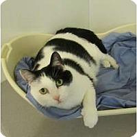 Adopt A Pet :: Freddy - Pascoag, RI