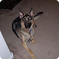 Adopt A Pet :: Kobe - Scottsdale, AZ
