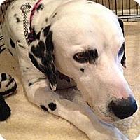 Adopt A Pet :: Ranger - Tampa, FL