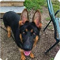 Adopt A Pet :: Kaiser - Brewster, NY