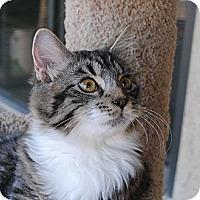 Adopt A Pet :: Ziggy - Palmdale, CA
