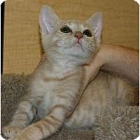 Adopt A Pet :: Fuego - Irvine, CA