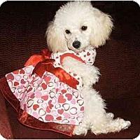 Adopt A Pet :: Diane - Mooy, AL
