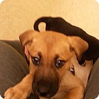Adopt A Pet :: Coco - Homewood, AL