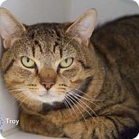 Adopt A Pet :: Troy - Merrifield, VA
