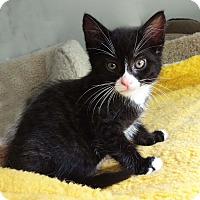 Adopt A Pet :: Antoinette - N. Billerica, MA