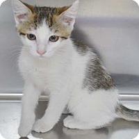 Adopt A Pet :: Lois - Merrifield, VA