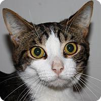 Adopt A Pet :: Boufford - North Branford, CT