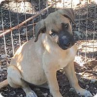 Adopt A Pet :: Annie (Susan) - Homestead, FL