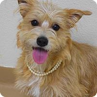Adopt A Pet :: Tanya - Dublin, CA