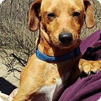 Adopt A Pet :: PJ - Charlestown, RI