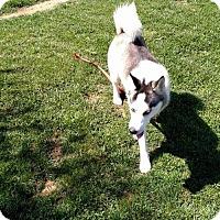 Adopt A Pet :: Ariel - Bristol, VA