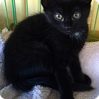 Adopt A Pet :: Artemis - Island Park, NY