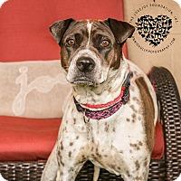 Adopt A Pet :: Jade - Inglewood, CA