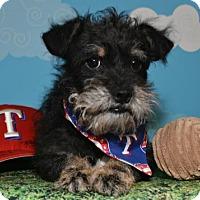 Adopt A Pet :: Rocket - Abilene, TX