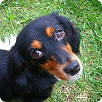 Adopt A Pet :: Annabelle - Grand Rapids, MI