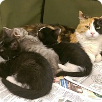 Adopt A Pet :: Butterscotch & Kittens - Lorain, OH
