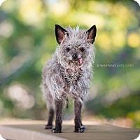Adopt A Pet :: Noel - El Cajon, CA