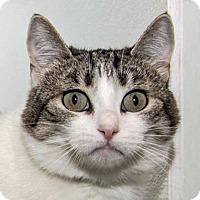 Adopt A Pet :: Disney - Prescott, AZ
