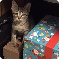 Adopt A Pet :: Latte - Byron Center, MI
