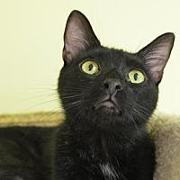 Adopt A Pet :: Berts 131134 - Atlanta, GA