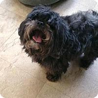 Adopt A Pet :: Poncha - Chicago, IL