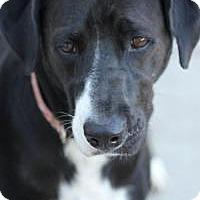 Adopt A Pet :: Isold - Yukon, OK