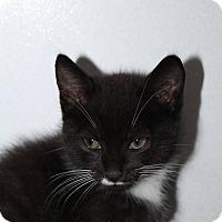 Adopt A Pet :: Domino - Butner, NC