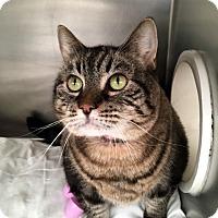 Adopt A Pet :: Lori - North Las Vegas, NV