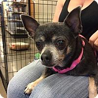Adopt A Pet :: Zelda - Phoenix, AZ