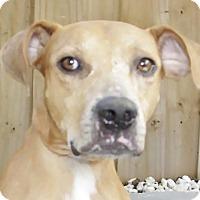 Adopt A Pet :: Penny - Oakland Park, FL