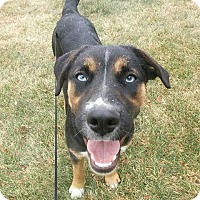 Adopt A Pet :: Leila - Billings, MT