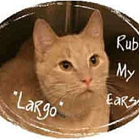 Adopt A Pet :: Largo (declawed) - Arlington, VA
