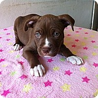 Adopt A Pet :: Jesse - Pompano Beach, FL