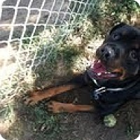 Adopt A Pet :: Max - Council Bluffs, IA