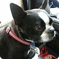 Adopt A Pet :: Newton - Lynnwood, WA