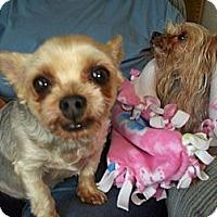 Adopt A Pet :: Pumpkin - Lorain, OH