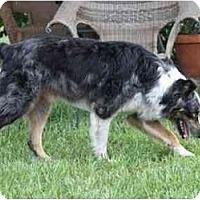 Adopt A Pet :: Gibson - Orlando, FL