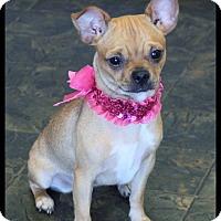 Adopt A Pet :: Matilda - Rockwall, TX