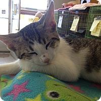 Adopt A Pet :: Toby - Island Park, NY