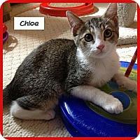Adopt A Pet :: Chloe - Miami, FL