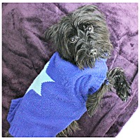 Adopt A Pet :: Dexter - Forked River, NJ