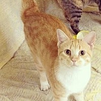 Adopt A Pet :: Margarita - Stuart, VA