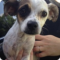 Adopt A Pet :: Rainey - Gainesville, FL