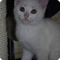 Adopt A Pet :: Snow White - Caistor Centre, ON